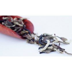 Darjeeling Spicy White