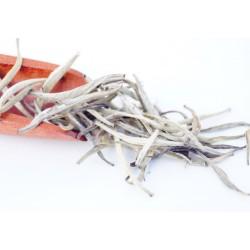 Darjeeling Silver Needles